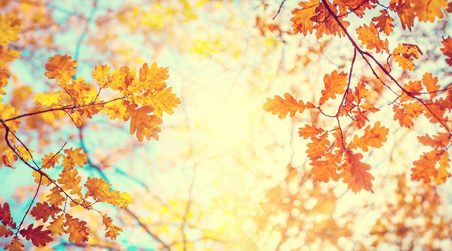 Autumn Escapes!